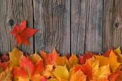 秋天在木桌,背景纹理上的枫叶 免版税库存照片