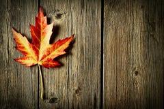 秋天在木背景的枫叶 免版税库存照片