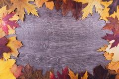 秋天在木背景的槭树叶子 顶视图 库存照片