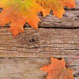 秋天在木背景的槭树叶子 免版税库存照片