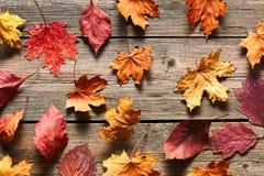 秋天在木背景的槭树叶子 免版税库存图片