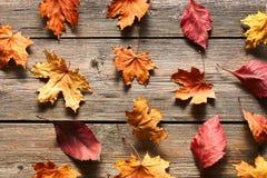 秋天在木背景的槭树叶子 图库摄影