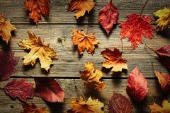 秋天在木背景的槭树叶子 库存照片