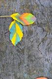秋天在木背景的色的叶子 库存照片