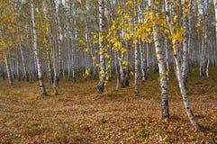 秋天在村庄 库存图片