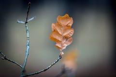去年秋天在枝杈的叶子 免版税图库摄影