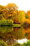 秋天在森林里在法国 免版税库存照片