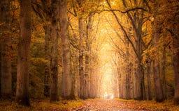 秋天在森林里 免版税库存图片