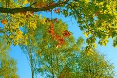 秋天在森林里 免版税图库摄影