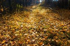 秋天在森林里 图库摄影