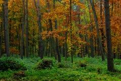 秋天在森林里 免版税库存照片