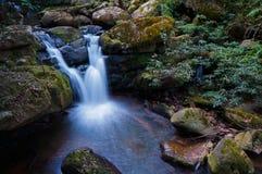 水秋天在森林里 免版税库存照片