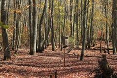 秋天在森林里 库存图片