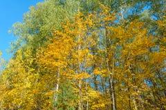 秋天在森林里 库存照片