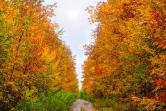 秋天在森林 库存照片
