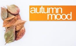 秋天在橙色长方形的心情文本与一束秋天离开 季节性设计元素 库存图片