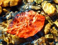 秋天在水下的山毛榉叶子彩色照相  免版税库存照片