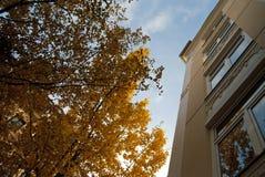 秋天在汉堡 免版税库存照片