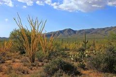 秋天在沙漠 库存图片