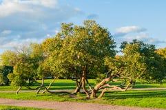 秋天在火星或Marsovo Polye -以火星命名的大公园的领域的跳舞树,罗马神,圣彼德堡,俄罗斯 库存图片