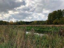 秋天在灰色天空下  免版税库存照片