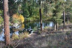 秋天在爱达荷 免版税库存照片