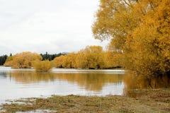 秋天在特卡波湖,新西兰 免版税库存图片