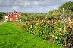 秋天在瑞典庭院里 库存图片