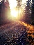 秋天在瑞典森林地 库存照片