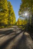 秋天在白杨木的早晨驱动器 库存图片