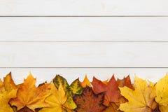 秋天在白色木背景的槭树叶子 免版税库存图片