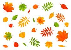 秋天在白色的颜色叶子 免版税库存照片