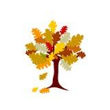 秋天在白色背景的橡树例证 免版税库存照片