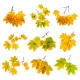 秋天在白色背景隔绝的分支集合 库存图片