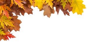 秋天在白色背景隔绝的槭树和橡木叶子 免版税库存图片