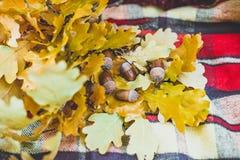 秋天在盖子的黄色橡木叶子 免版税库存照片