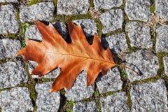 秋天在石路面的橡木叶子 库存照片