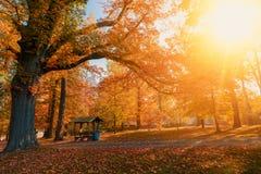 秋天在秋季的公园 库存照片