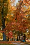 秋天在秋季的公园 免版税库存图片