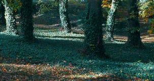 秋天在秋季的公园 股票录像