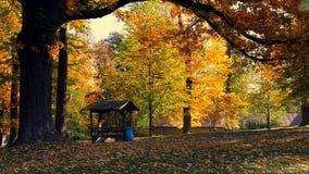 秋天在秋季的公园 股票视频