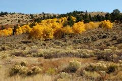 秋天在科罗拉多 图库摄影