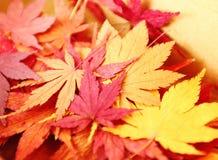 秋天在箱子的槭树叶子 图库摄影