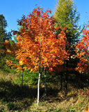 秋天在米尼亚波尼斯 免版税库存图片