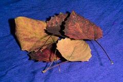 秋天在纸的槭树叶子 免版税库存照片