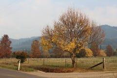 秋天在维多利亚地区 库存照片