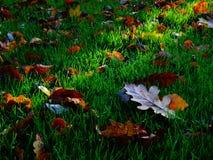 秋天在绿草的下落的叶子 免版税库存图片