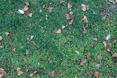 秋天在绿草领域,看法从上面离开,秋天背景 库存图片