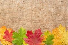 秋天在羊毛布料背景的槭树叶子 免版税图库摄影