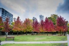秋天在美好的颜色的槭树 库存图片